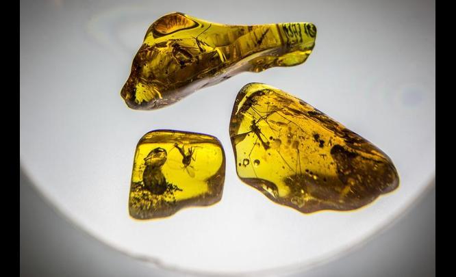 amber-kaliningrad