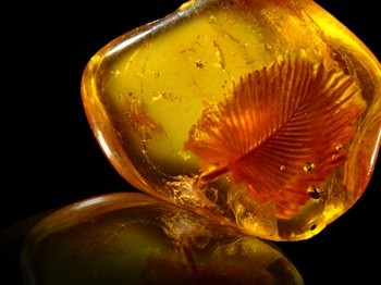 Amber world