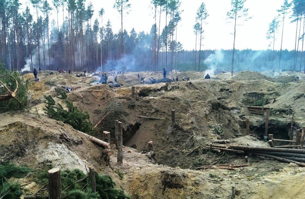 На Волыни «янтарная лихорадка» губит деревья