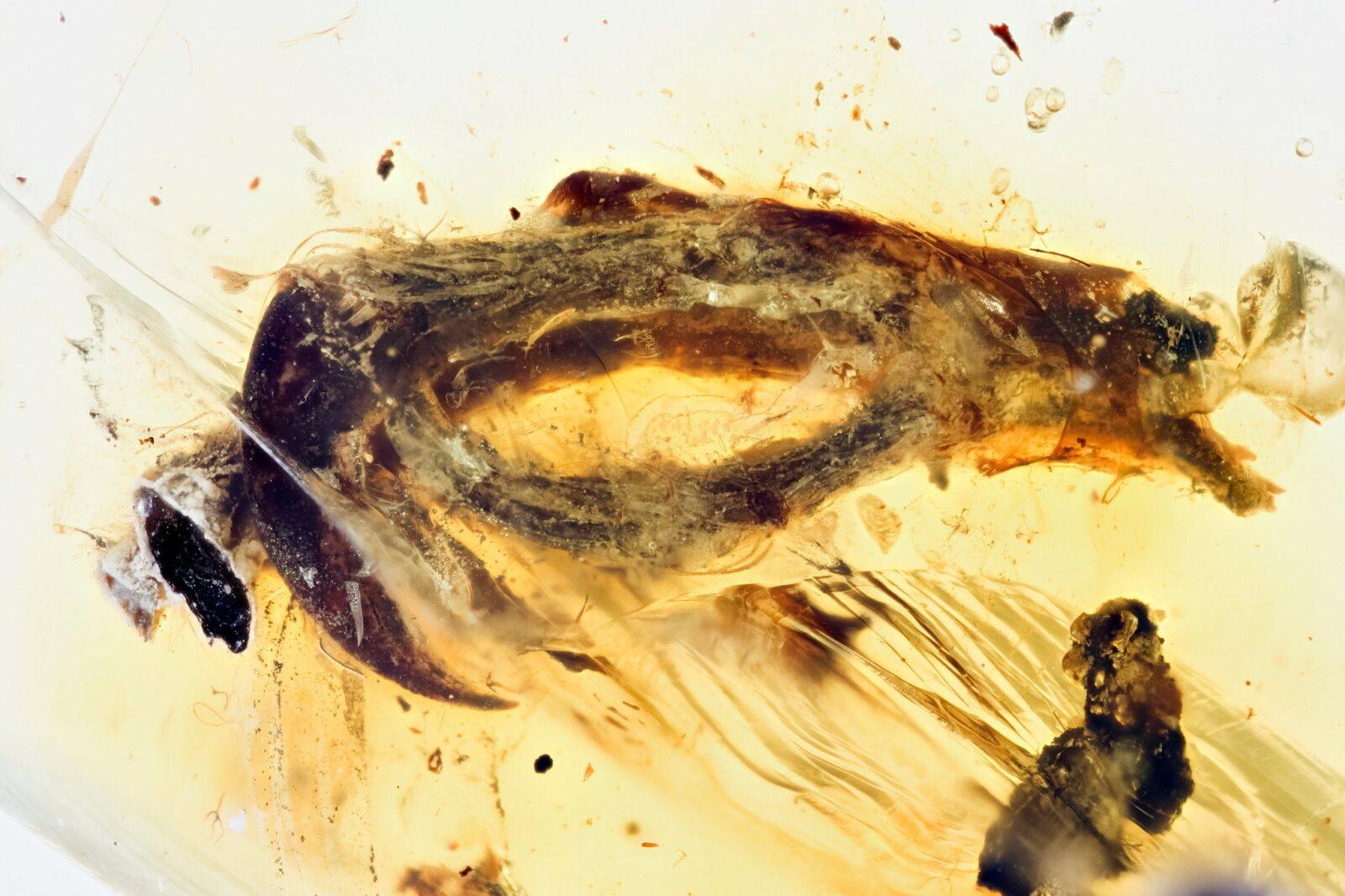 Застывшая в куске янтаря лапка древней птицы ознаменовала научный прорыв