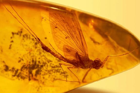 Тамбовчане увидят редкие янтарные самородки с доисторическими насекомыми