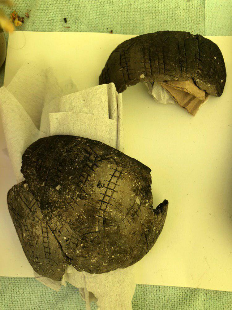 Петербуржцы нашли в смоленском торфе неолитический кубок со змеёй и янтарь – свидетельство древней торговли