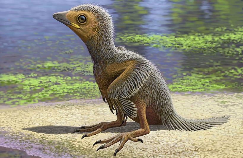 Исследователи нашли фрагмент крыла птицы, обитавшей примерно 100 млн лет назад