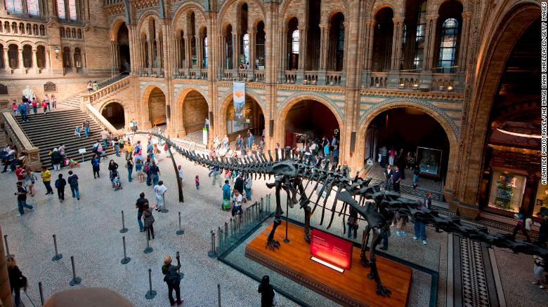 «Кровавый янтарь» может стать окном в эпоху динозавров, но палеонтологи столкнулись с этическими проблемами при изучении окаменелостей