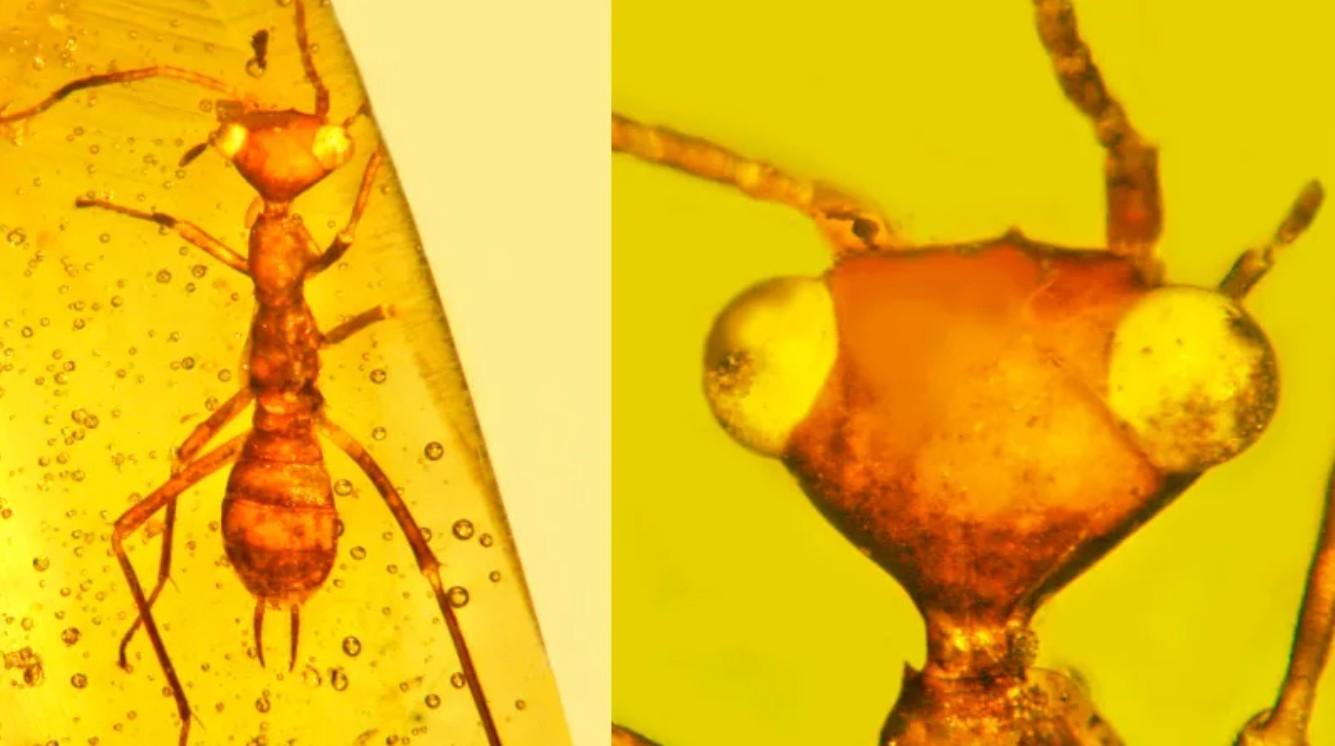 Самые странные янтарные окаменелости из когда-либо обнаруженных