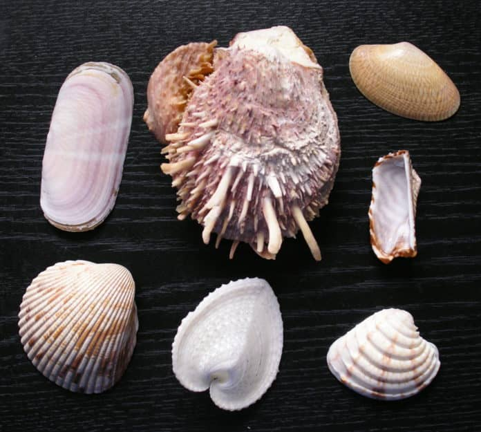 Обнаруженные в янтаре моллюски 100 млн лет назад были пресноводными